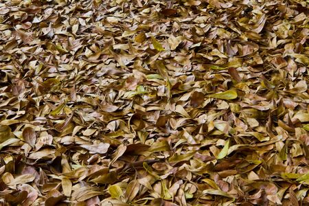 Dry leaves on the ground   Leaves covered ground color brown is beautiful   Stock Photo