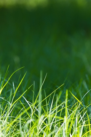 Grass backlit   The grass is pretty green light on the background of nature   Stock Photo