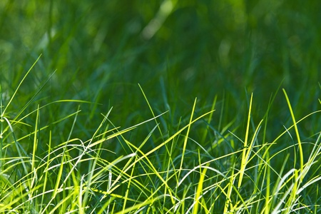 Grass backlit with green background   The grass is pretty green light on the background of nature   Stock Photo