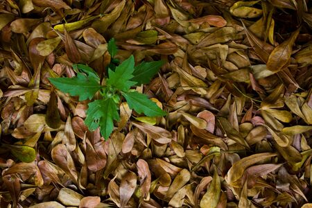 Green tree on dry leaves background   Nature has created a new lift on the ground covered with dead leaves