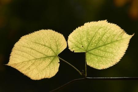 나뭇 가지에 나뭇잎의 일치하는 쌍
