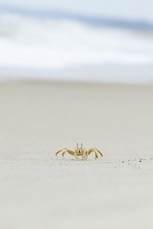 외로운 게 해변에 스톡 콘텐츠
