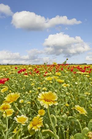 야생 여름 필드의 꽃
