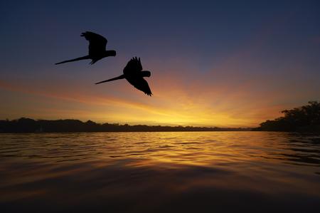 아마존 지역의 블루 마코 앵무