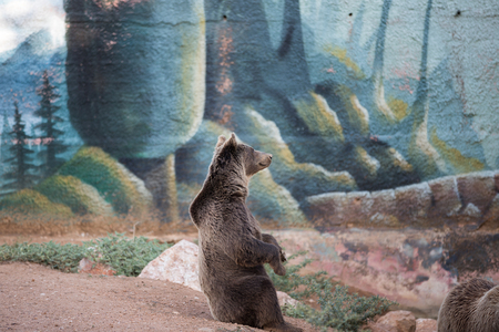 A brown bear sitting at the zoo. Imagens