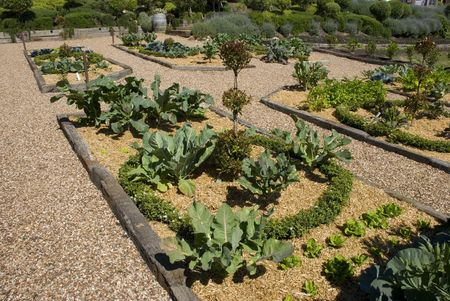 plentifully: a large potager vegetable garden, growing plentifully in the summer sunshine