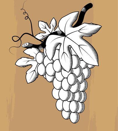 Grape woodcut Vector