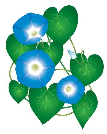 Flower Ipomoea Morning Glory Vector