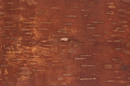 bark: Birch bark background. Inner side. Stock Photo