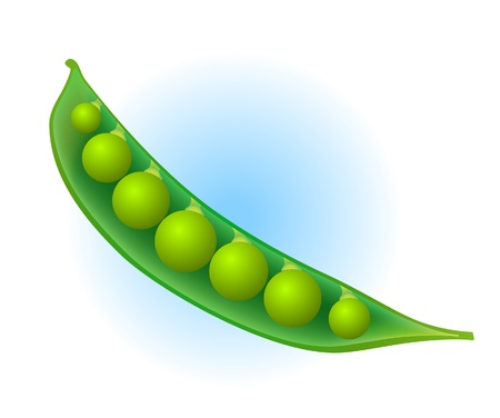 green bean: Pea pod Illustration