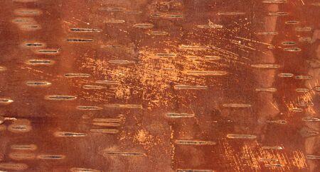 Birch bark photo