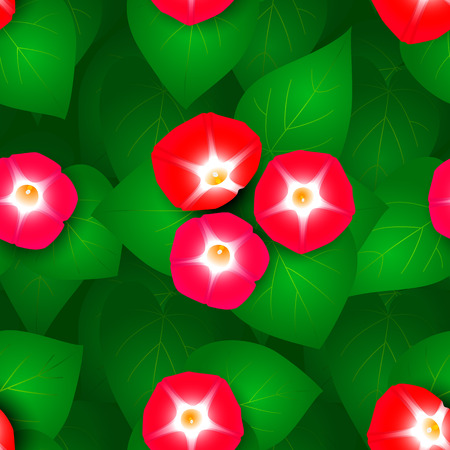 ipomoea: Seamless pattern with flowers ipomoea red star Illustration