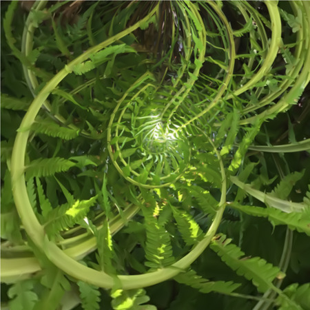 vibrations: Abstract spiral of fern with positive vibrations Illustration