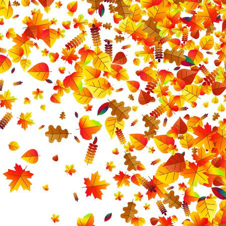 eberesche: Autumn leaves scattered background with oak, maple and rowan