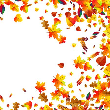 Autumn leaves with oak, maple and rowan Illustration