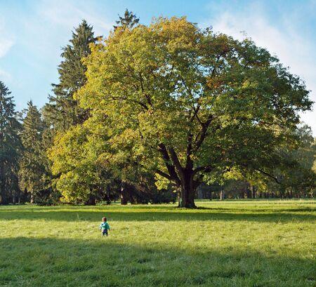 branchy: A little boy in front of branchy oak