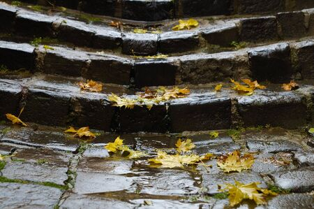 sone: Yellow leves on old wet stairway