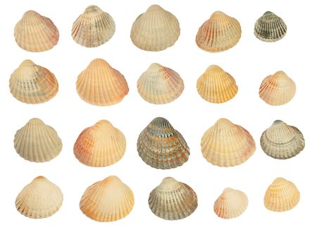 Set of twenty shells isolated photo