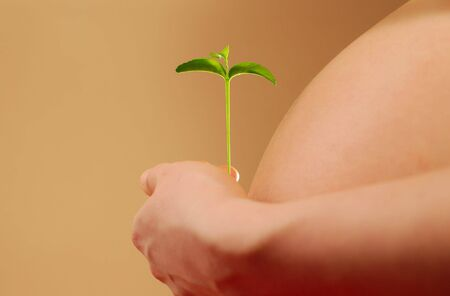 Pregnant woman belly and hand with young plant in warm light  Stock Photo - 7240691