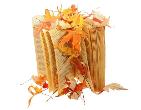 Book under leaves isolated