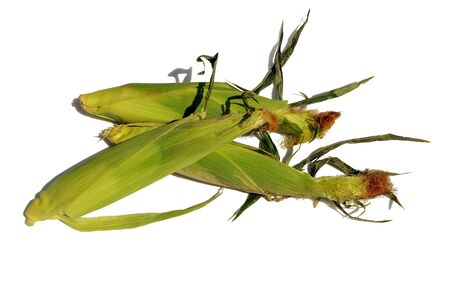 three corncobs isolated over white photo