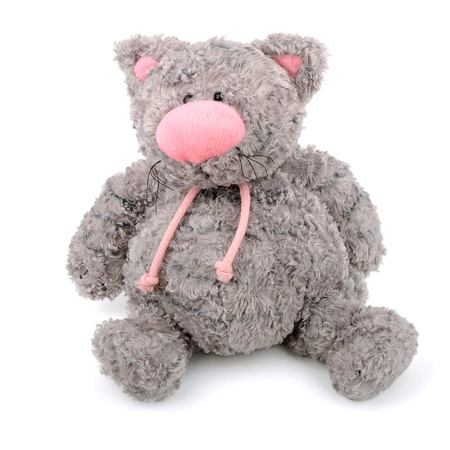 grey teddy cat with pink nose isolated photo