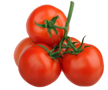 Branch of ripe red tomatoes isolated photo