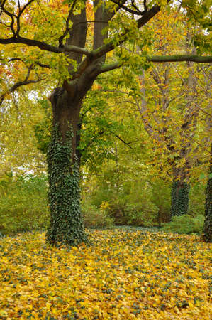 Golden Fall in park  Trees and leves on the ground Stock Photo - 16402247