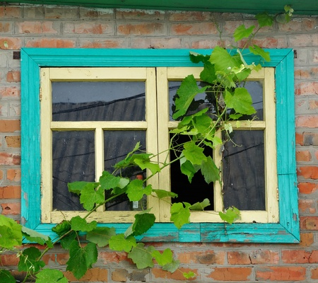 window in brick wall with vine on it Stock Photo - 18914098