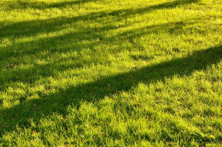 grass with bright sun illumination deep shadows from trees