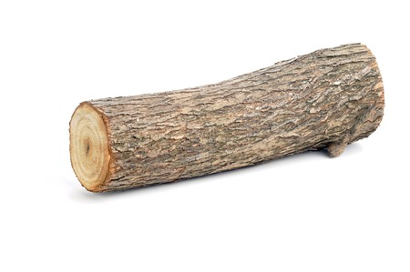 one willow log isolated over white background