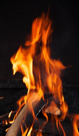 smolder: oak logs are burning with orange color flame
