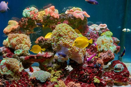 Fishes and other fauna of coral reef in aquarium