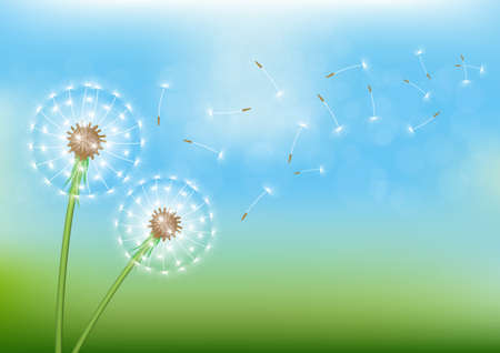 Dandelion with flying seed on sky. Vector illustration