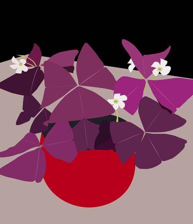 Ornamental plants Oxalis Triangularis (Butterfly Flower) Stock Vector - 141434570