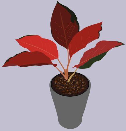 Ornamental Plants Aglaonema Kochin red Illustration