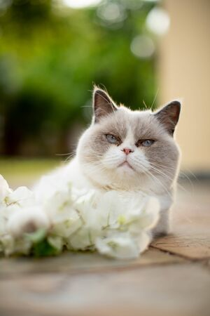 fluffy white cat with white flower
