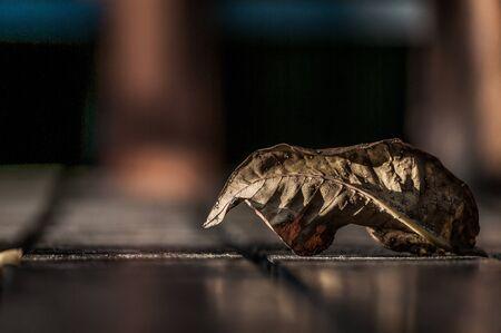 dried leaf: A shot of a fallen dried leaf on a wooden floor.