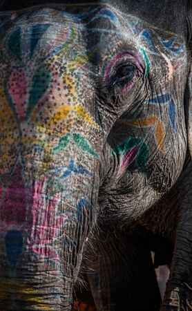 painted face: A close up shot of an elephant with painted face showing the details of the skin.