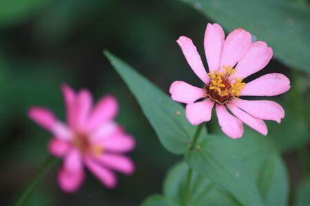 Belles fleurs comme une belle vie