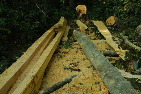 indonesian biodiversity: Logging Activity In Indonesian Forest Stock Photo