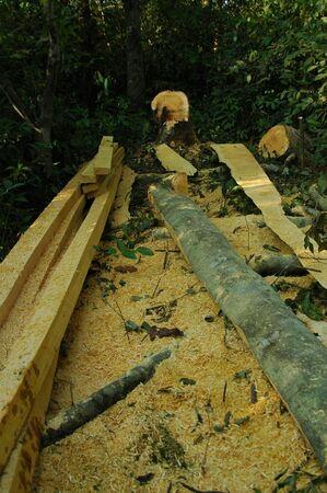 logging: Logging In Indonesian Natural Forest