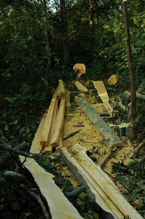 logging: Indonesian Logging Stock Photo