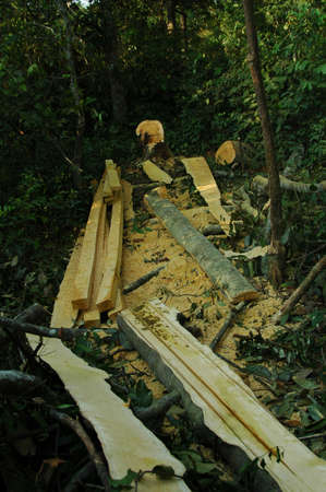 logging: Logging in Indonesian Forest