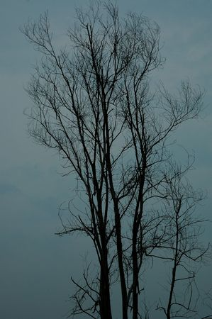 indonesian biodiversity: The Dying Tree