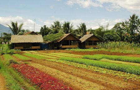 Organic Farm in Bogor, West Java, Indonesia Stock Photo