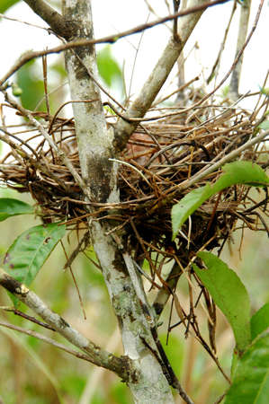 Bird Nest on the tea Plantation
