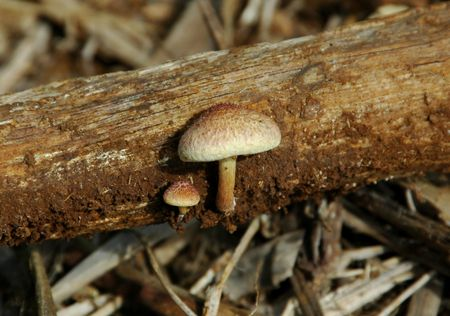 unidentified: que no pueda identificarse la madera de hongos