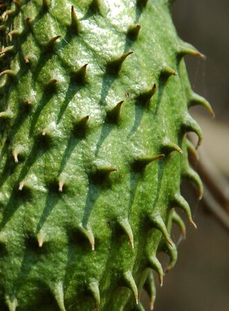 Soursop Skin Stock Photo