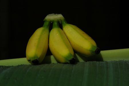 musa: Musa paradisiaca Fruit